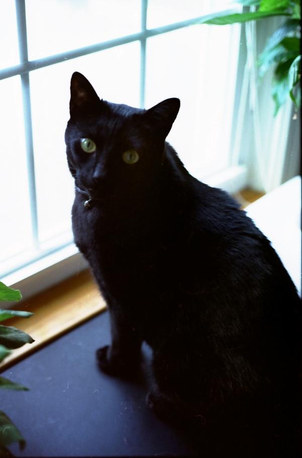 Midian in the Back Window