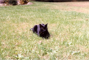 Midian in the Grass at My Parent's House